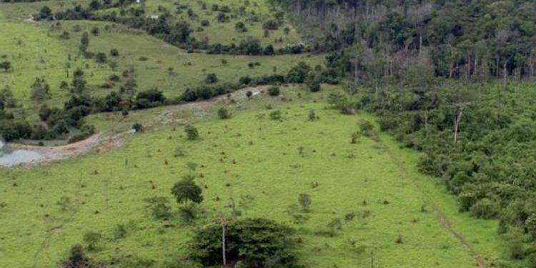 O Pará teve uma redução de 118.302 quilômetros quadrados. Divulgação