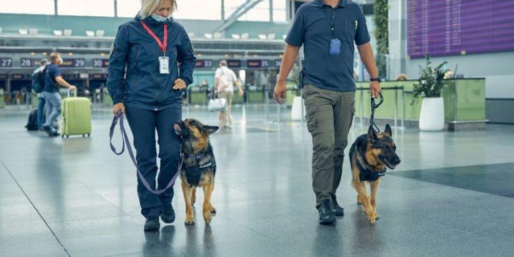 Cães farejadores estão sendo altamente treinados para ajudar no combate ao Covid-19, como em alguns aeroportos internacionais. Uma das medidas mais importantes para isso é a identificação precoce de pacientes contaminados - Fotos: Divulgação