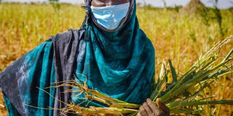 Foto: FAO/Petterik Wiggers