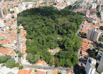 Bosque dos Jequitibás, espremido entre avenidas e prédios da cidade. Projeto é manter apenas os animais pequenos e que vivem livres. Foto: Divulgação
