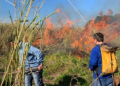 Técnicos combate foco de incêndio em mata: expectativa este ano é de menos queimadas em Campinas. Foto: Divulgação