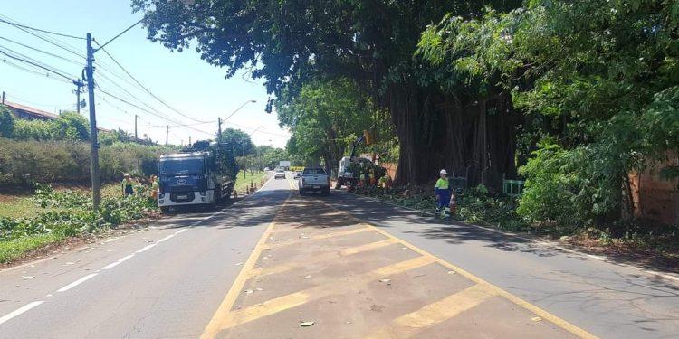 Podas e cortes de árvores na Estrada da Rhodia, em Barão Geraldo. Foto: Divulgação