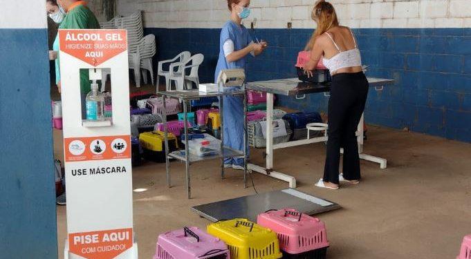 Gatos são entregues em caixas com respeito às regras de distanciamento social - Foto: Divulgação/PMC