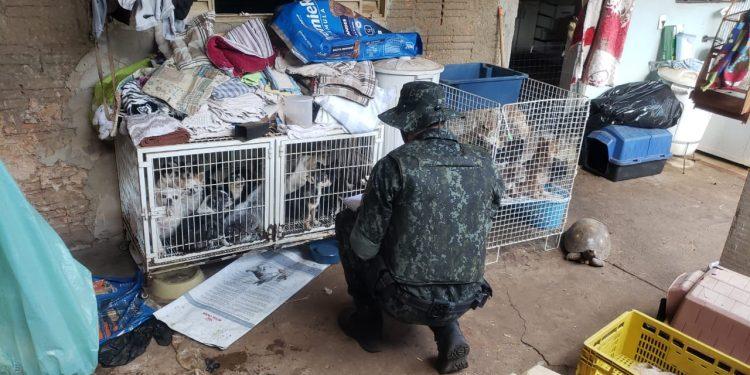Policial Ambiental durante vistoria na casa onde os animais eram mantidos em condições insalubres. Fotos: Polícia Ambiental