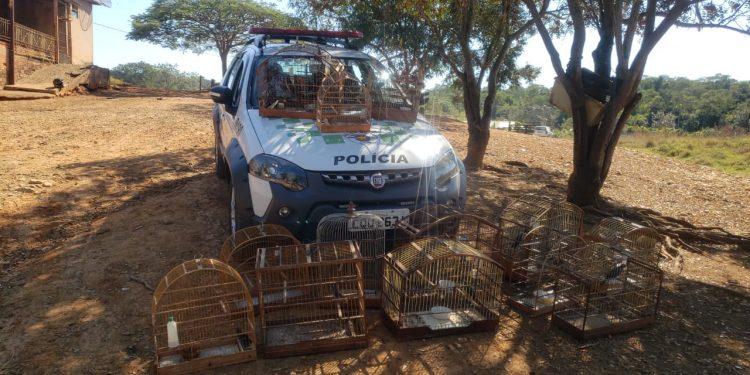 Passaros mantidos em cativeiro e que foram resgatados pela Polícia Ambiental em Sumaré. Foto: Divulgação