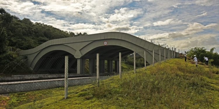 Viaduto do complexo de estruturas de passagens de fauna instaladas na Área de Proteção Ambiental Rio São João/Mico-Leão-Dourado. Foto: Reprodução