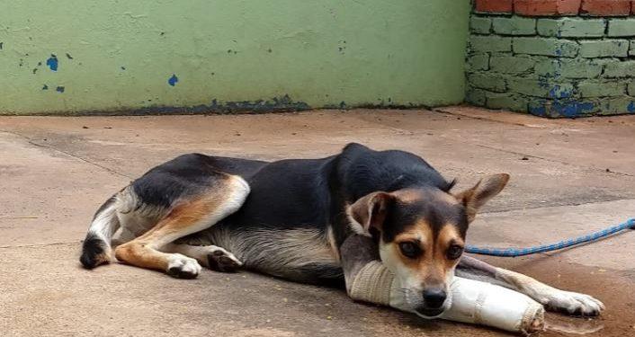 Doação para entidades ajudará a manter animais abandonados - Foto: Divulgação/PMC