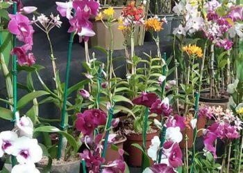 Feira de orquídeas e suculentas no Bosque terá entrada gratuita - Foto: Divulgação