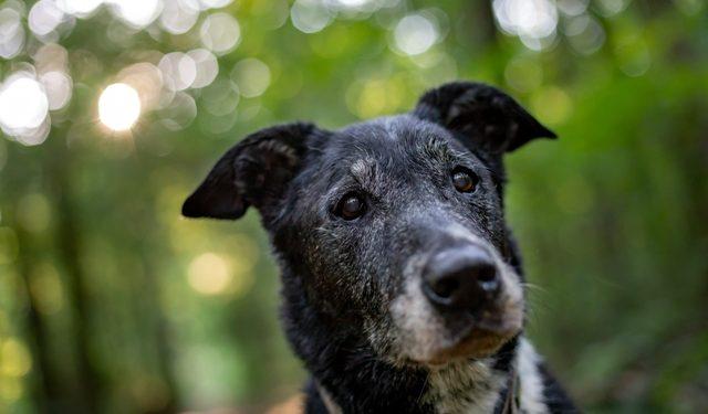 Médica veterinária dá dicas de como tutores podem cuidar dos cães idosos - Foto: Divulgação