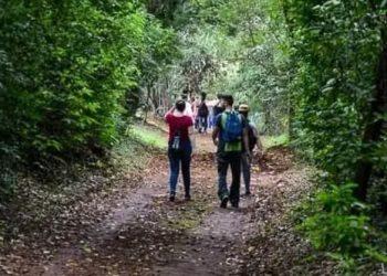 Ampliação número de pessoas: visitantes podem percorrer parte das trilhas da mata sozinhos, com duas ou mais pessoas, sem acompanhamento dos monitores - Foto: Divulgação