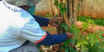 Espaço da horta na Casa Antônio Fernandes dos Santos: acolhidos,  moradores de rua são convidados a trabalhar seus projetos de vida - Fotos: Divulgação