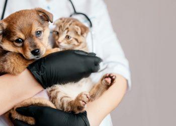 Vacinação contra a raiva é fundamental para proteger pets da doença - Foto: Divulgação