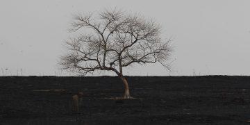 A cena lembra um retrato de paisagem morta, mas é o que restou de uma vegetação de fazenda atingida por incêndio em agosto, em Jaguariúna Foto Leandro Ferreira/Hora Campinas