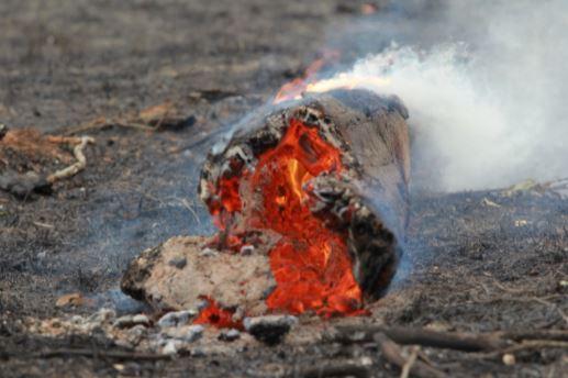 Tronco queima após incêndio que devastou mata nativa e vegetação de fazendas em Jaguariúna, agosto passado: planeta pede socorro Foto: Leandro Ferreira/Hora Campinas