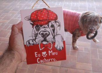 Crescimento do mercado Pet: período de pandemia ampliou adoção e cuidados de tutores com seus animais de estimação - Leandro Ferreira/Hora Campinas