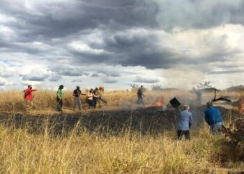 Brigadistas e voluntários tentam conter fogo em mata em Campinas. Foto: Carlos Bassan/ PMC